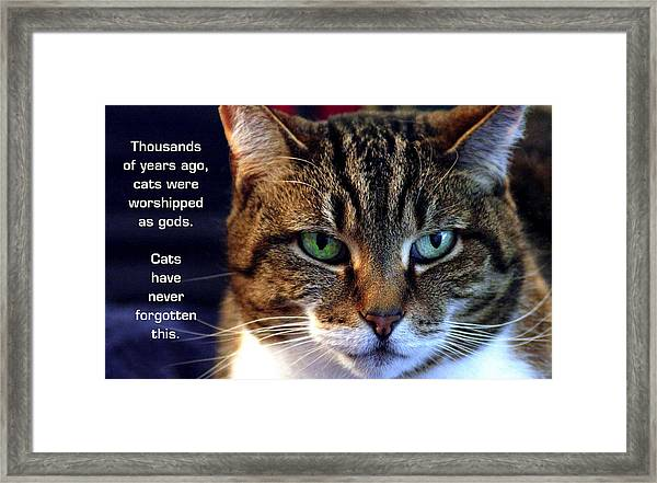 Cat Gods Framed Print by Mike Flynn