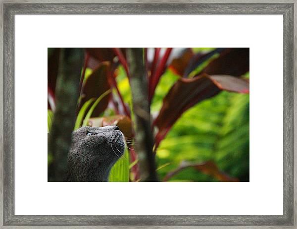Cat Hunting Framed Print by Debbie Cundy