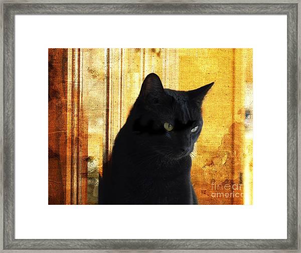 Cat In Contemplative Mood Framed Print