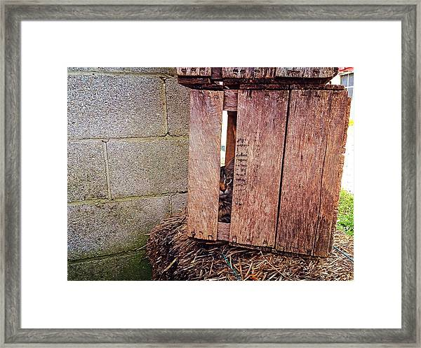 Cat In Hiding Framed Print