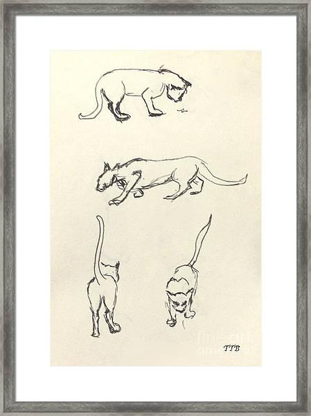 Cat Lines Framed Print