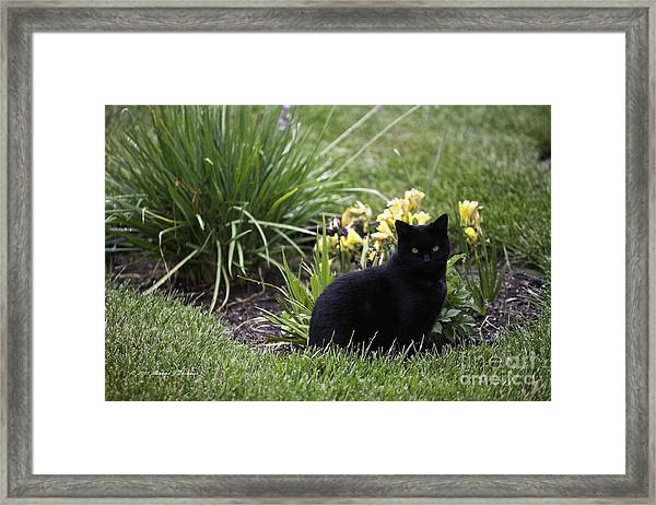 Cat Looking At You. Framed Print