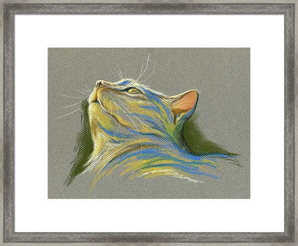 Cat Looking Up To Heaven Framed Print