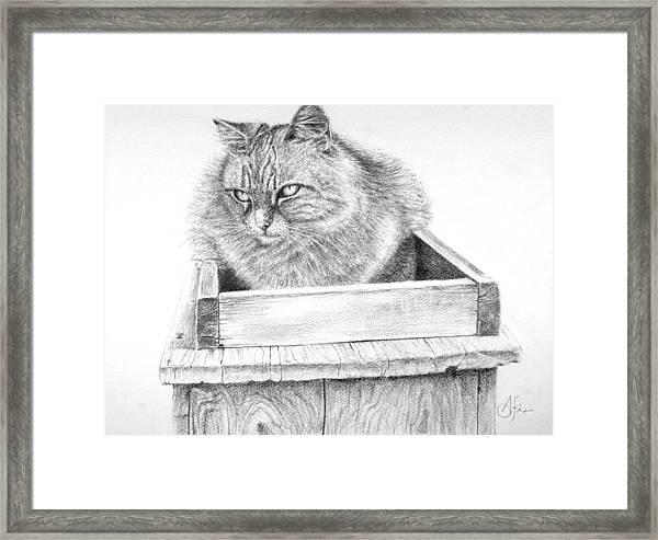Cat On A Box Framed Print