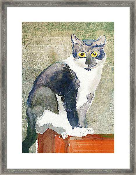 Cat On A Post Framed Print