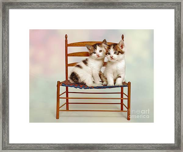 Cat Pals Framed Print