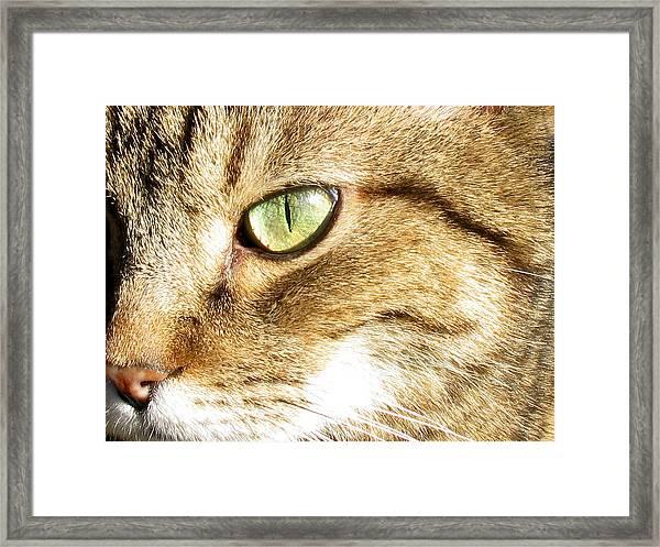 Cat Portrait 2 Framed Print