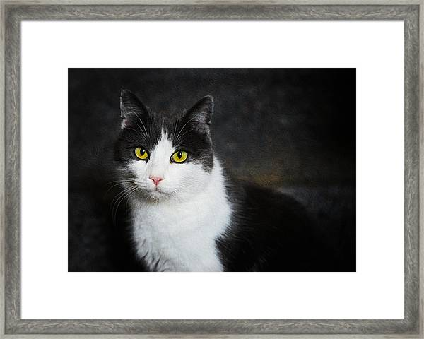 Cat Portrait With Texture Framed Print