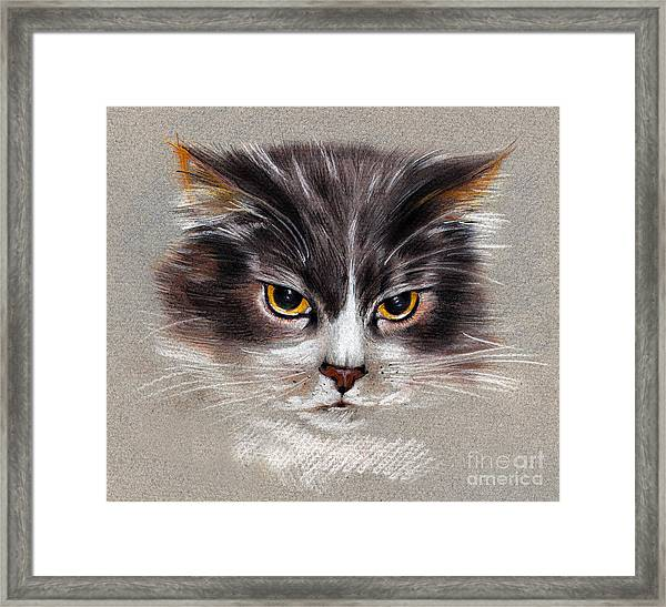 Cat Portrait Yellow Eyes Framed Print