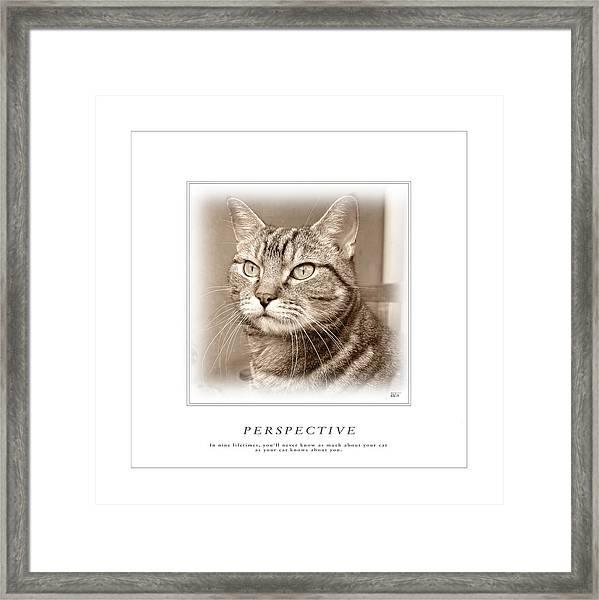 Cat Reflections 1 Framed Print