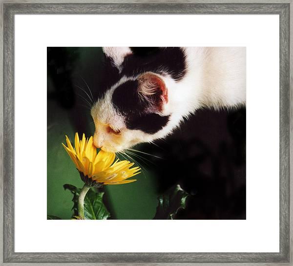 Cat Smelling Flower Framed Print