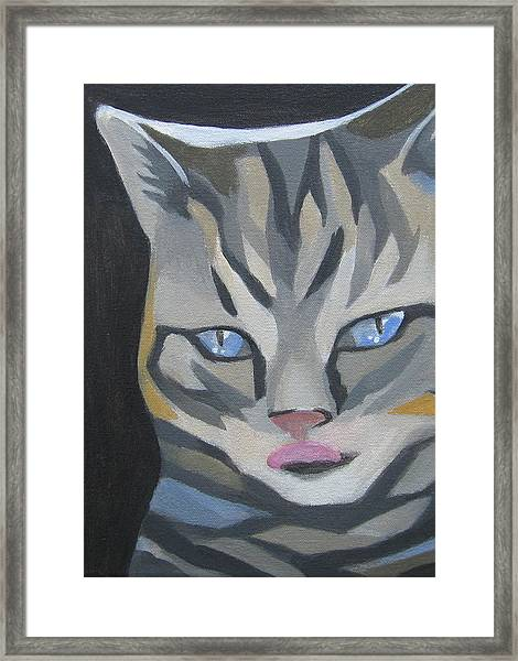 Cat With Tongue  Framed Print