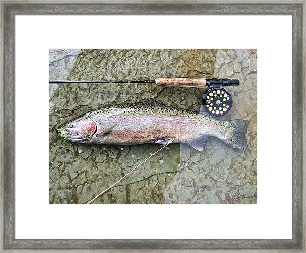Framed Print featuring the photograph Catch And Release by David Armstrong