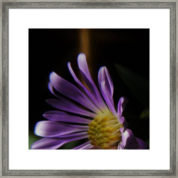 Catching The Sun's Rays Framed Print