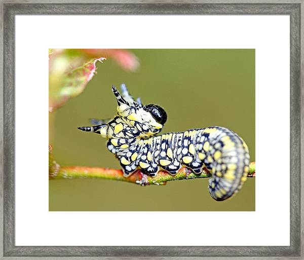 Caterpillar Framed Print by Brian Magnier