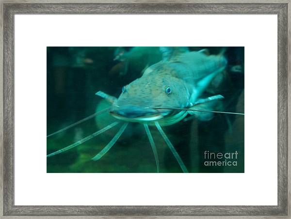 Catfish Billy Framed Print