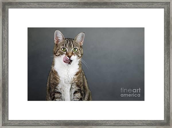 Catlick Framed Print