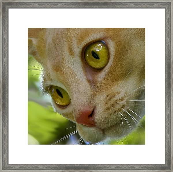 Cats Eyes Framed Print