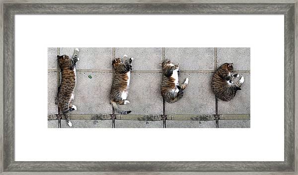 Cat's Life 3 Framed Print
