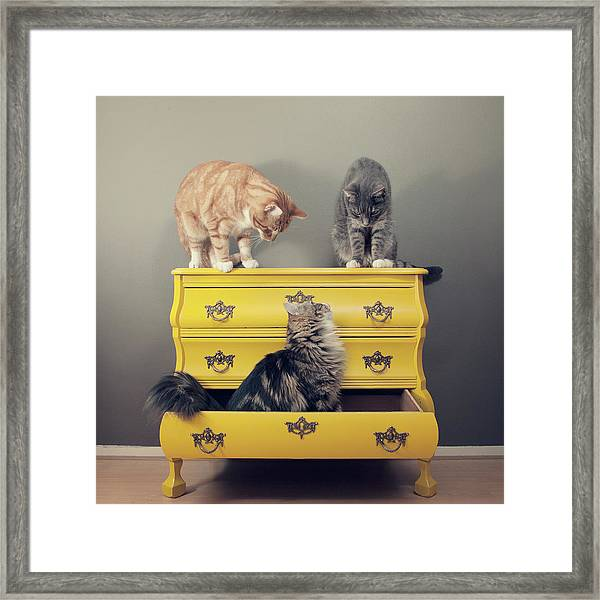 Cats Sitting On Cabinet Framed Print