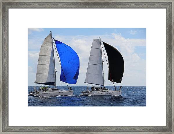 Cats With Spinnakers Framed Print by Debbie Cundy