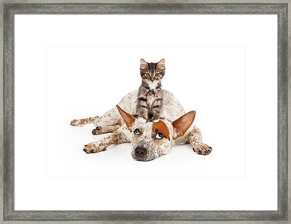 Catte Dog With Kitten On His Head Framed Print
