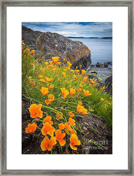 Cattle Point Poppies Framed Print