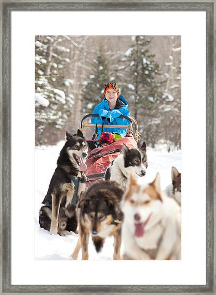 Caucasian Child Sits In Siberian Husky-drawn Sled Framed Print by ImagineGolf