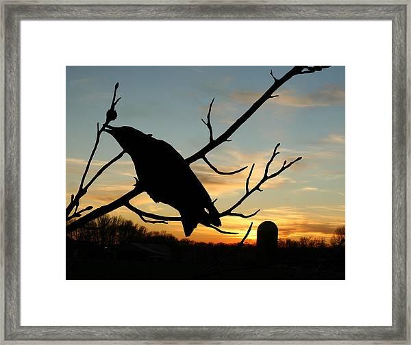 Cawcaw Over Sunset Silhouette Art Framed Print