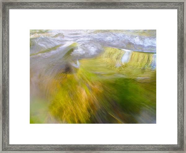 Cedar 20 Framed Print