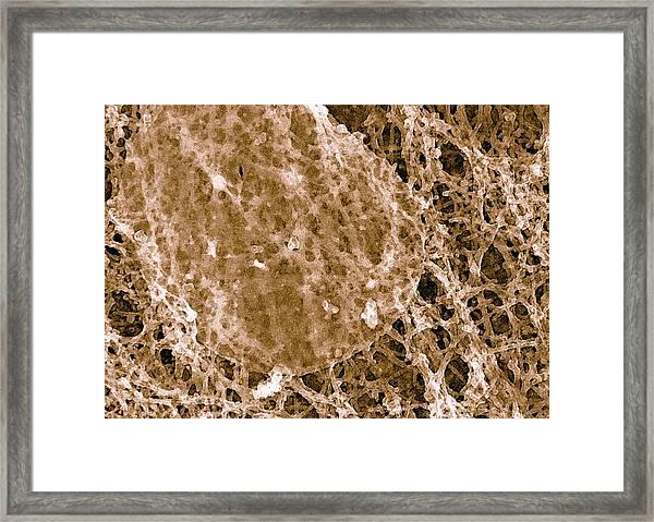 Cell Membrane Raft Framed Print by Ammrf, University Of Sydney