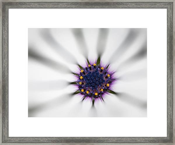 Center Of Life Framed Print