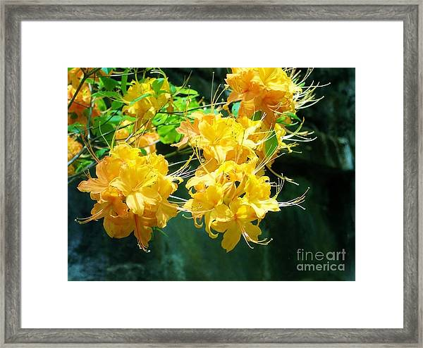 Centered Yellow Floral Framed Print