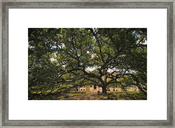 Century Tree Framed Print