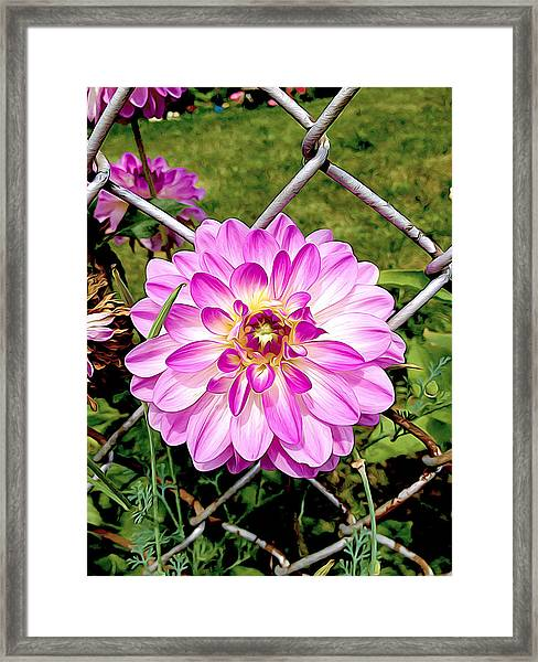 Chain Link Bloom Framed Print