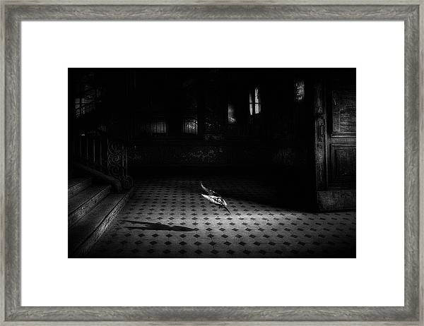 Chance Encounter Framed Print