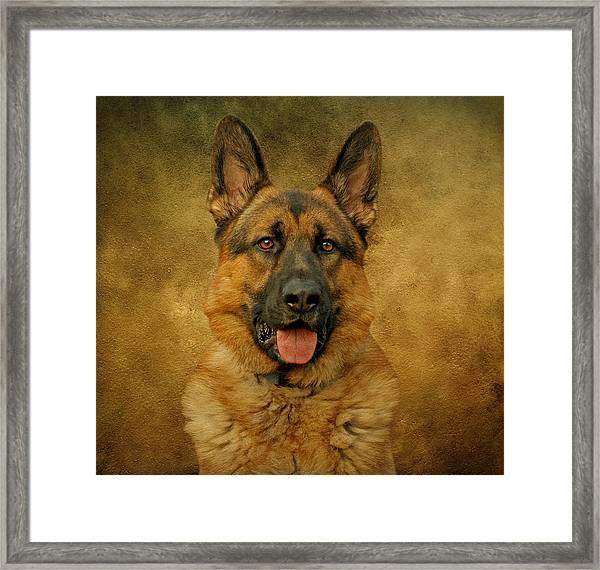 Chance - German Shepherd Framed Print