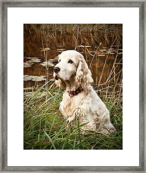 Chandler Framed Print by Keith Hutchings