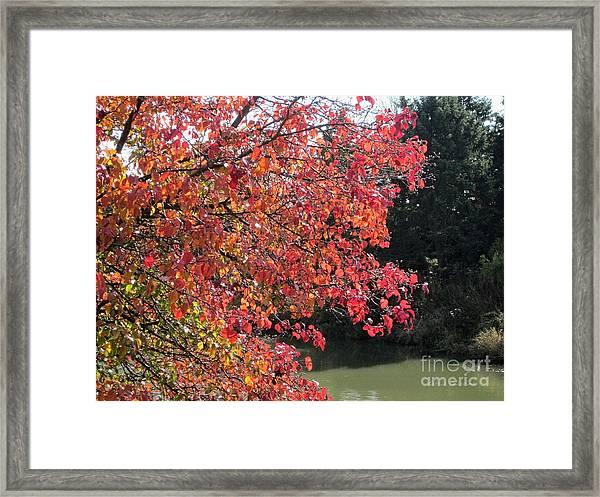 Changing Leaves Framed Print