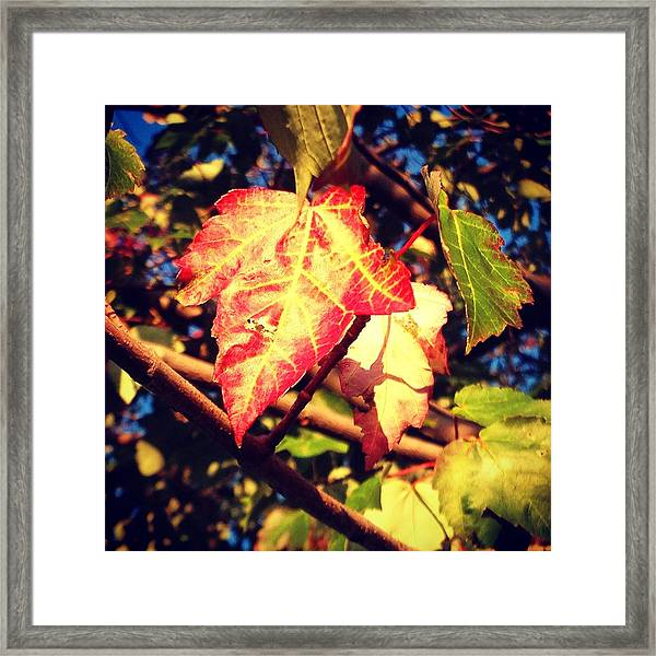 Framed Print featuring the photograph Changing Season by Candice Trimble