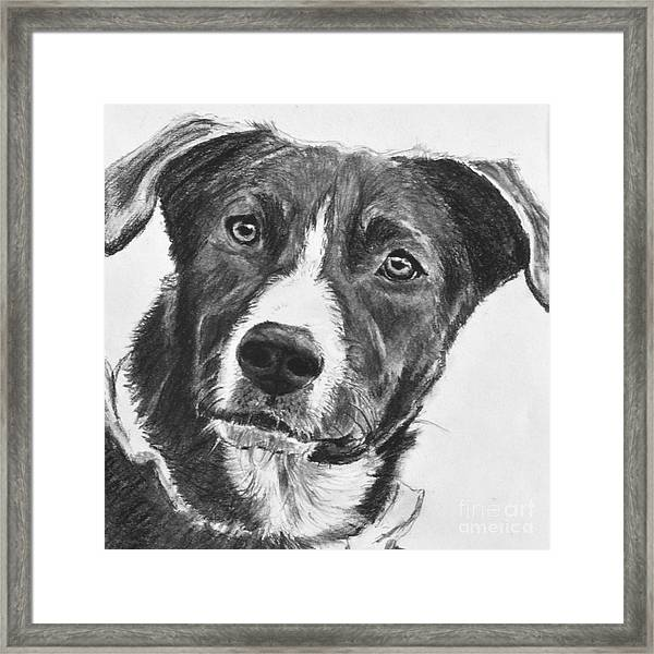 Charcoal Dog Shepherd Framed Print