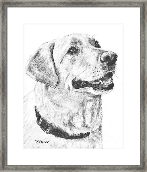 Charcoal Drawing Yellow Lab In Profile Framed Print