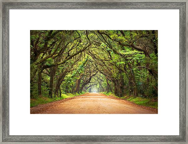 Charleston Sc Edisto Island - Botany Bay Road Framed Print
