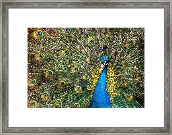 Charming Framed Print by Ivan Vukelic