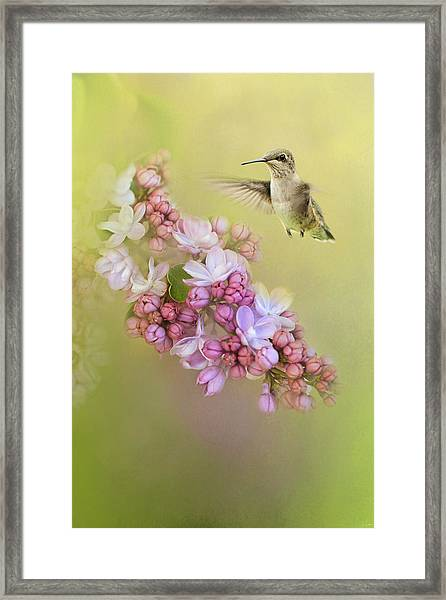 Chasing Lilacs Framed Print