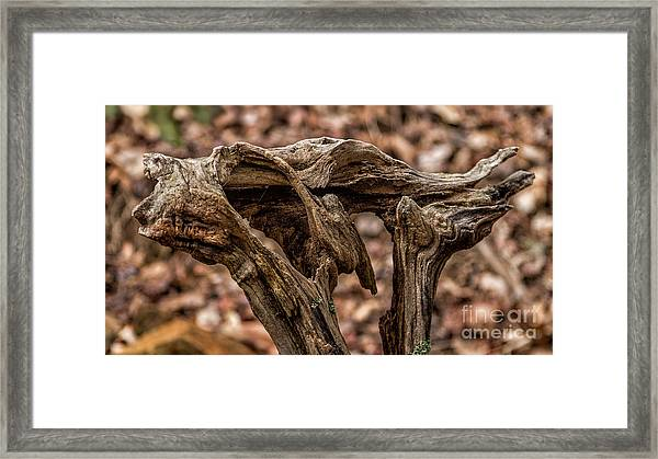 Chattahoochee National Forest Framed Print