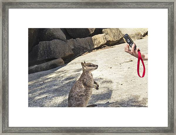 Cheeese Framed Print by Debbie Cundy