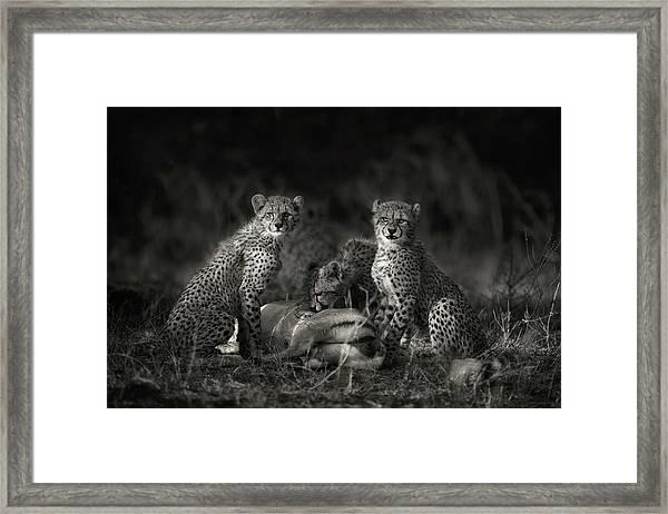 Cheetah Cubs Framed Print by Mario Moreno