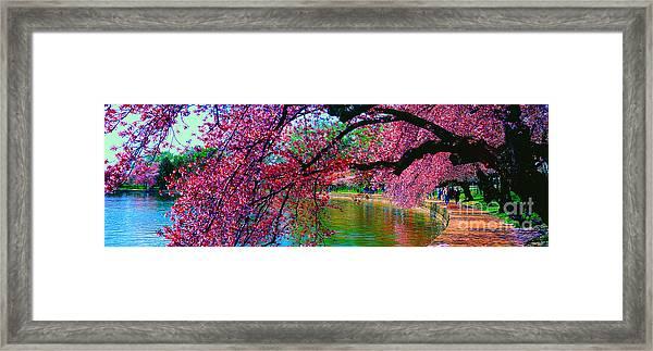 Cherry Blossom Walk Tidal Basin At 17th Street Framed Print