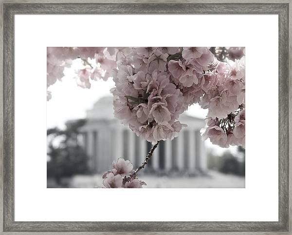 Cherry Blossoms At Jefferson Memorial Framed Print